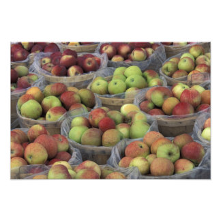 New York State Macintosh apples in baskets Art Photo