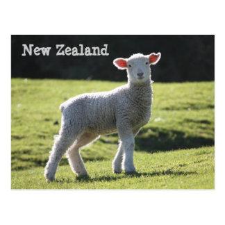 New Zealand - Adorable Lamb Looking at You Postcard