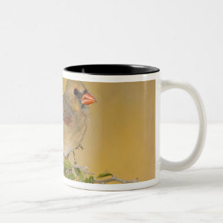 Northern Cardinal female perched on branch Two-Tone Mug