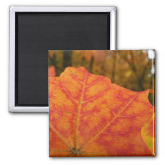 Orange and Red Maple Leaf Abstract Autumn Nature Square Magnet