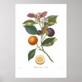 Orange,Bigarrade violette Poster