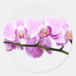 orchid round sticker