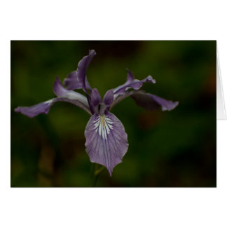 Oregon Iris Note Card