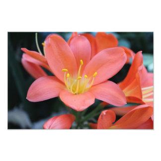 Original Photo Print of Flower