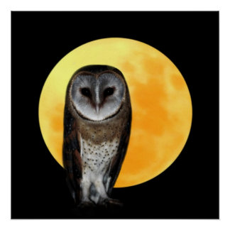 Owl and the full moon poster
