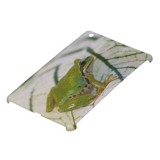 Pacific tree frog on flowers in our garden, iPad mini cover