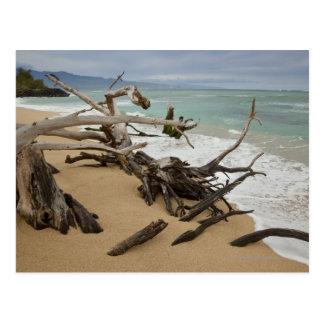 Paia Bay Beach, Maui, Hawaii, USA Postcard