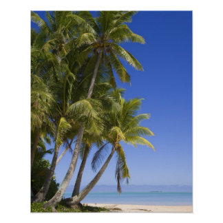 Palm lined beach Cook Islands 3 Poster