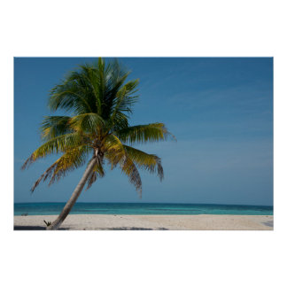 Palm tree and white sand beach  2 poster