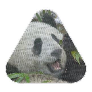 Panda eating bamboo on snow, Wolong, Sichuan,