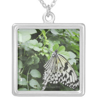 Paper Kite Butterfly (Idea leuconoe) on vine, Square Pendant Necklace