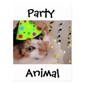 Party Animal/Calico Cat Postcard