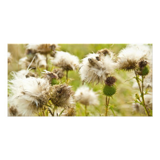 Past Blossoming Thistle Personalized Photo Card