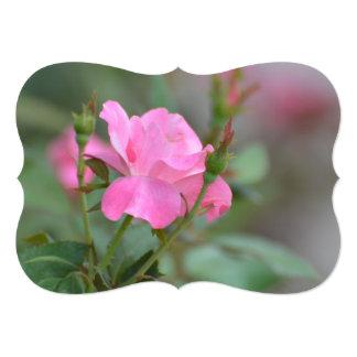 Pastel Pink Rose in Iraq 13 Cm X 18 Cm Invitation Card