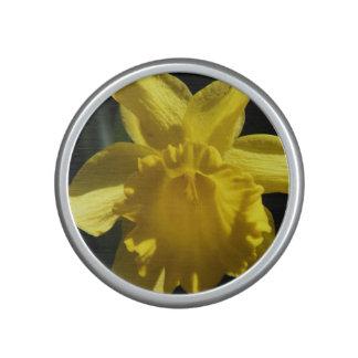 Perfect Daffodil Speaker