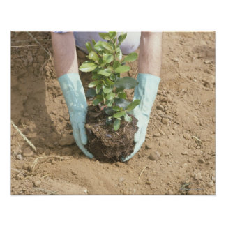 Plant a Tree on Earth Day Poster