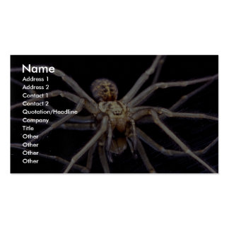 Poisonous menacing recluse spider pack of standard business cards