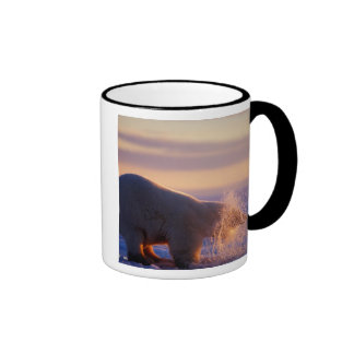Polar bear pulling its head out of a hole in the ringer mug