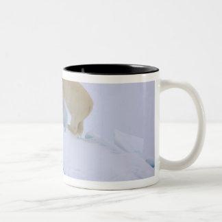 polar bear, Ursus maritimus, climbing up rough Two-Tone Mug