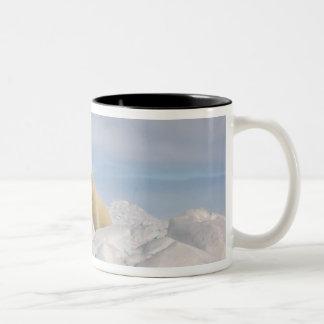 polar bear, Ursus maritimus, in rough ice on Two-Tone Mug