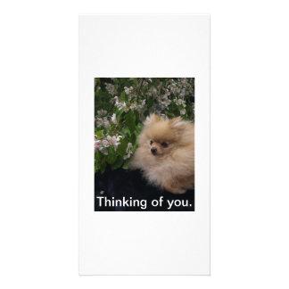 Pomeranian card picture card