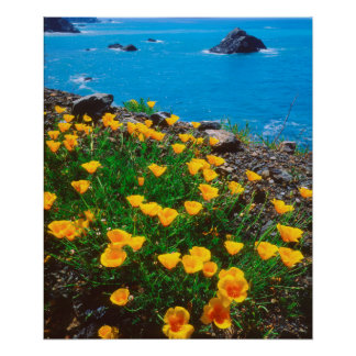 Poppies along the Pacific Coast Poster