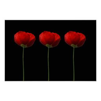 Poppies on Black Poster