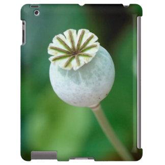 Poppy Flower Head Seed, Western Cape