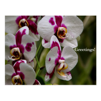 Postcard - Orchid