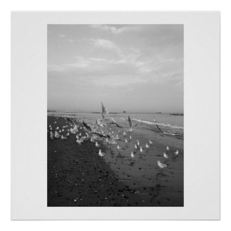 Poster sea gulls on the beach black and white