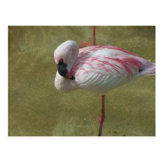 Pretty Flamingo Postcard