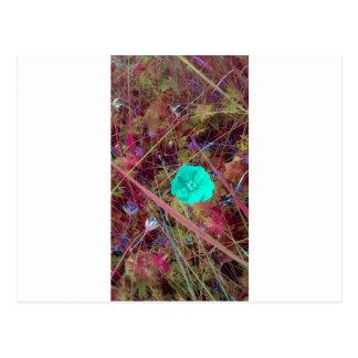 Psycodelia Flowers Unique Trendy Modern Postcard