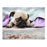 Pug looking innocent postcard
