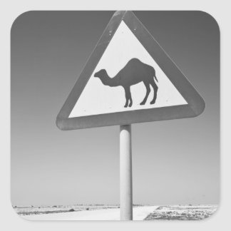 Qatar, Al Zubarah. Camel Crossing Sign-Road to Square Sticker