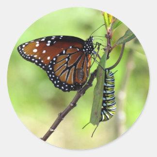 Queen Butterfly and Monarch Caterpillar Sticker