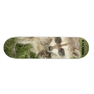Raccoon Custom Skateboard