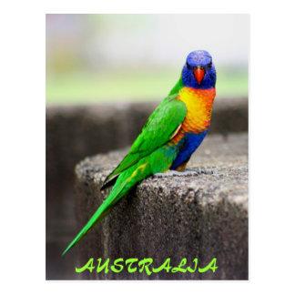 Rainbow Lorikeet, AUSTRALIA Postcard