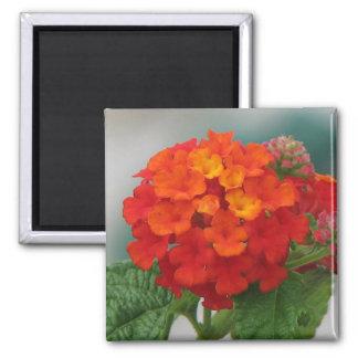 Red and Orange Lantana Square Magnet