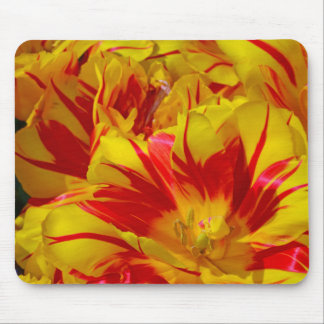 Red and yellow striped spring tulips mouse pad