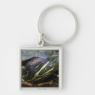 Red-eared Slider, Trachemys scripta elegans, 2 Silver-Colored Square Key Ring