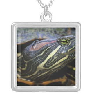 Red-eared Slider, Trachemys scripta elegans, 2 Square Pendant Necklace