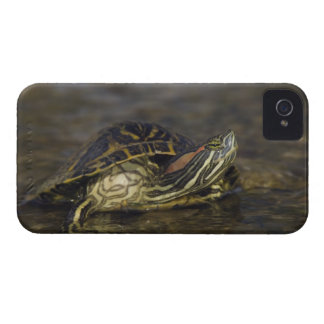 Red-eared Slider, Trachemys scripta elegans, iPhone 4 Case-Mate Cases