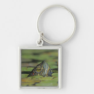 Red-eared Slider, Trachemys scripta elegans, Silver-Colored Square Key Ring