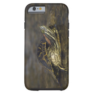 Red-eared Slider, Trachemys scripta elegans, Tough iPhone 6 Case