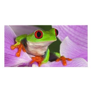 Red Eye Tree Frog Customised Photo Card