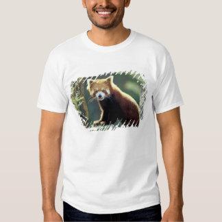 Red Panda Ailurus fulgens) Shirts