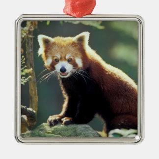 Red Panda Ailurus fulgens) Silver-Colored Square Decoration