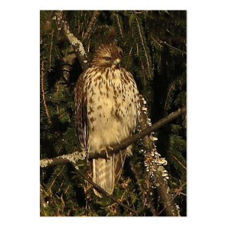 Red Tailed Hawk ATC Pack Of Chubby Business Cards