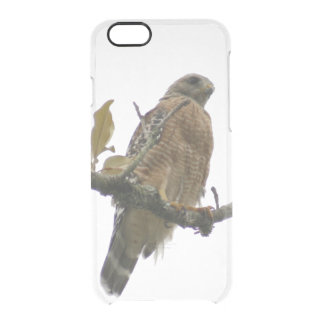 Red Tailed Hawk Photo Clear iPhone 6/6S Case