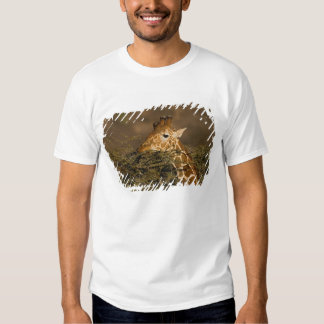 Reticulated Giraffe, Giraffe camelopardalis Shirt